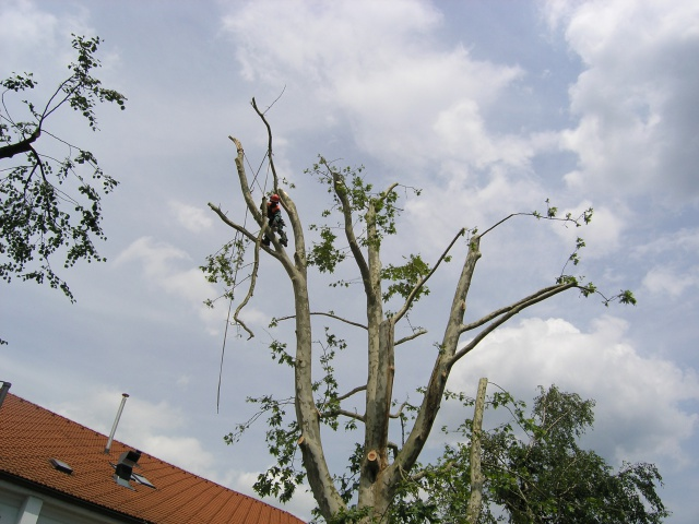 Repairing a windbreak in Kamnik, 2008