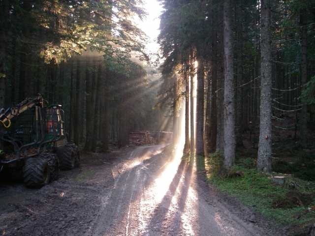 Extraction of timber at Pokljuka