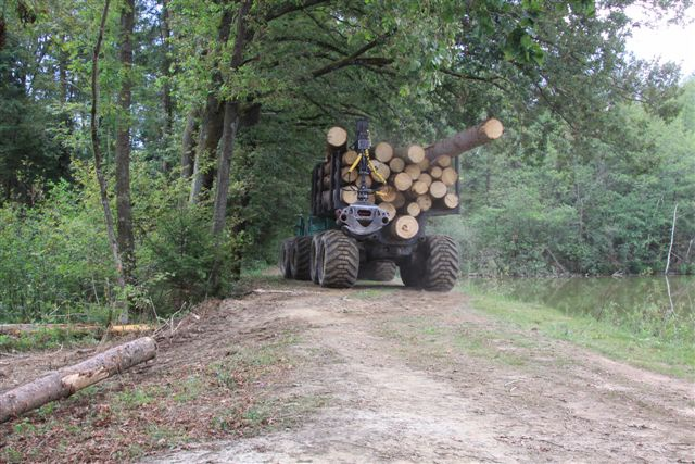 Extraction of timber by the Rakovnik pond in the Draga park near Ig