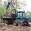 Extraction of timber after the treatment of the felled trees