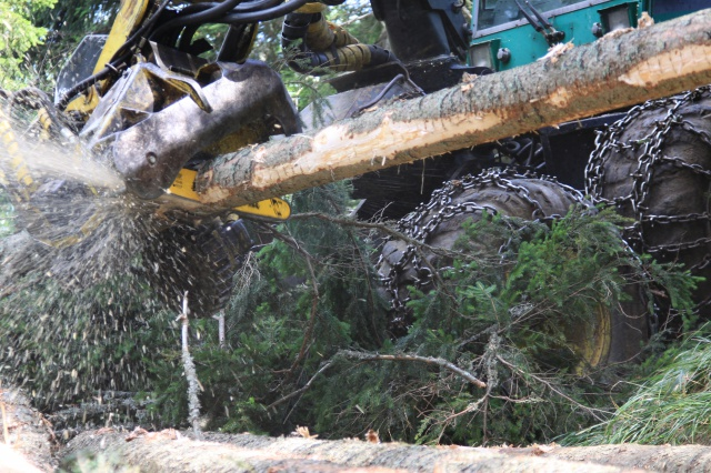 Machine-supported felling in the Koroška region